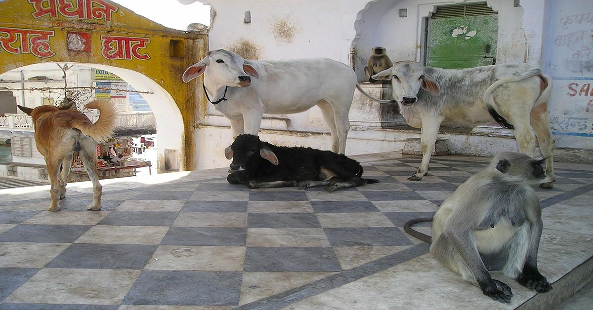 Svete krave književnosti – domaći pisci…